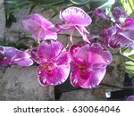 purple orchid close up | Shutterstock . vector #630064046
