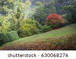 autumn at olinda   Shutterstock . vector #630068276