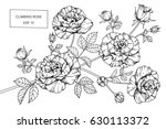 climbing rose flowers drawing... | Shutterstock .eps vector #630113372