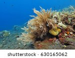 sea plume  sea plant  on the... | Shutterstock . vector #630165062