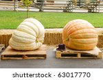 Giant Pumpkins Waiting To Be...