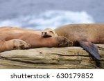 Trio Of  Sea Lions Resting...