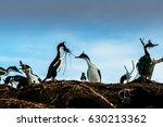 cormorants in tierra del fuego  ... | Shutterstock . vector #630213362