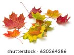 colorful autumn maple leaf... | Shutterstock . vector #630264386