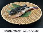 Japanese Fugu Fish  Puffer Fish