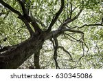 green natural background of... | Shutterstock . vector #630345086
