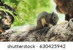 squirrel eating   Shutterstock . vector #630425942