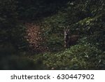 curious deer in the forest | Shutterstock . vector #630447902