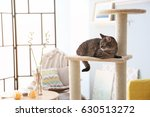 cute cat sitting on tree in... | Shutterstock . vector #630513272