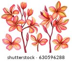 watercolor set of plumeria... | Shutterstock . vector #630596288