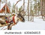 reindeer in lapland | Shutterstock . vector #630606815