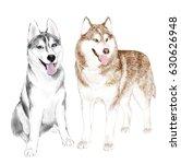 two adult siberian husky dogs...   Shutterstock .eps vector #630626948