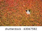 Colorful Ivy Covering Wall  In...