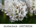 Macro Photos Of Flowers Of A...