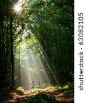Sun Beams Pour Through Trees In ...