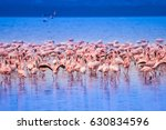 pink flamingo. flock of... | Shutterstock . vector #630834596