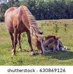 summer. horses on pasture | Shutterstock . vector #630869126