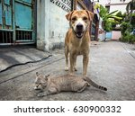 Cat And Dog On Street