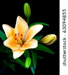 single lily with three buds and ... | Shutterstock . vector #63094855