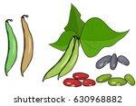 green beans. white background... | Shutterstock .eps vector #630968882