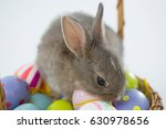 basket with easter eggs and... | Shutterstock . vector #630978656