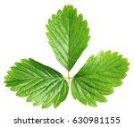 fresh green strawberry leaf... | Shutterstock . vector #630981155