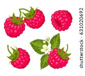 ripe juicy berries of raspberry ... | Shutterstock .eps vector #631020692