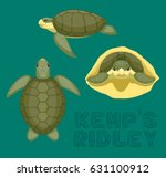 sea turtle kemp's ridley...