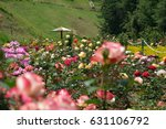 Stock photo rose garden in ooty south india 631106792