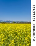 rape blossoms | Shutterstock . vector #631127696