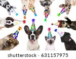 Stock photo multiple pet animals isolated wearing birthday hats for a party 631157975