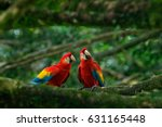 pair of big scarlet macaws  ara ... | Shutterstock . vector #631165448