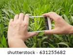agronomist is taking photo of... | Shutterstock . vector #631255682