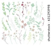 colorful hand drawn herbs ... | Shutterstock .eps vector #631293998