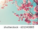 pink blossoms on the branch... | Shutterstock . vector #631343885