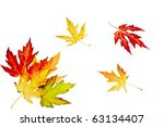 colorful autumn leaves   Shutterstock . vector #63134407
