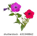 Two Stems With A Bright Red An...