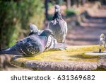 Pigeons Drinking And Bathing I...