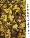Small photo of autumnal acer campestre or field maple fallen leaves with tawny