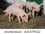 pigs | Shutterstock . vector #631579322