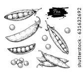 pea hand drawn vector... | Shutterstock .eps vector #631632692