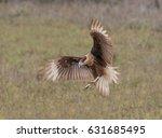 caracara in the landing zone  ... | Shutterstock . vector #631685495