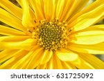 green leaf | Shutterstock . vector #631725092