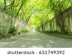 Row Of Tree Tunnel With...
