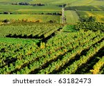 Aerial view of a vineyard in Germany - stock photo
