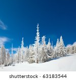 Winter Snow Covered Fir Trees...