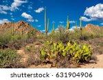 saguaro national park  tucson ...   Shutterstock . vector #631904906