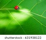 ladybug insects walking on...