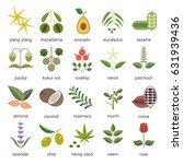 set of herbs and plants hand... | Shutterstock . vector #631939436