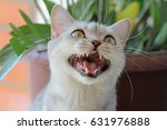 scottish cat | Shutterstock . vector #631976888